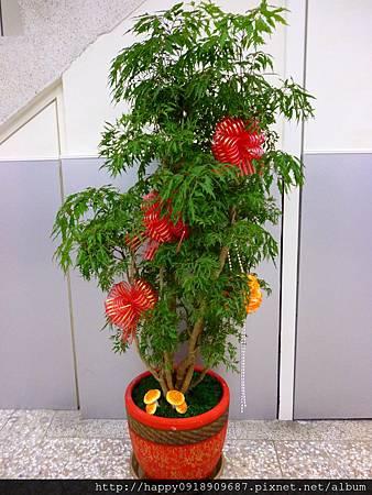 P1010378 富貴樹