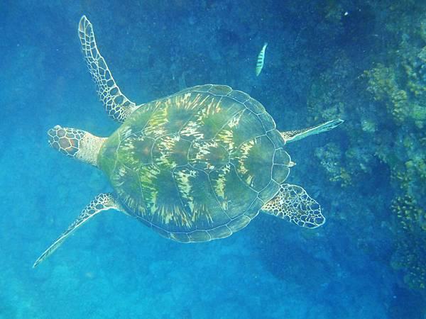 海龜1.jpg