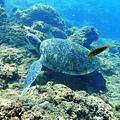 海龜.jpg