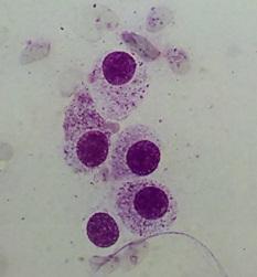 mast cell tumor FNA
