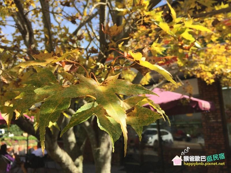 見晴blog_20.jpg
