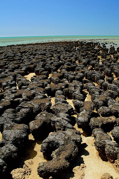 035_IMG_3410_Hamelin_Pool海岸的古生物讓這裡成了世界遺產.JPG