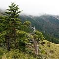 012_MG_1204_C_走過12K到15K的陡坡,這裡的緩坡讓人可以稍稍喘口氣,順便看看草原景致.JPG