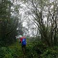 003_MG_1076_C一開始是約七公里的林道,天氣不是很好,視野不佳.JPG