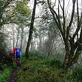 005_MG_1085_C_在雲霧中的林道,氣氛不錯,不過大家體力正好,忙著趕路,沒有停留.JPG