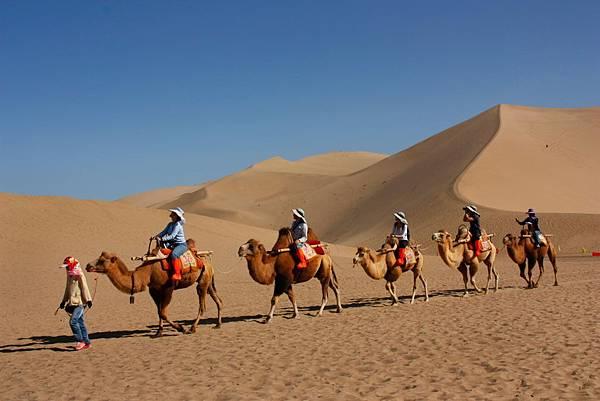 034_MG_9700_C_鳴沙山,過去騎駱駝是商隊,現在騎駱駝都是遊客,這裡的駱駝是雙峰,和埃及的單峰駱駝不同.JPG