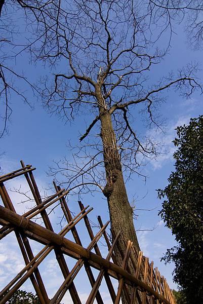 019_MG_3480_C_蘇州拙政園有特色的樹.JPG