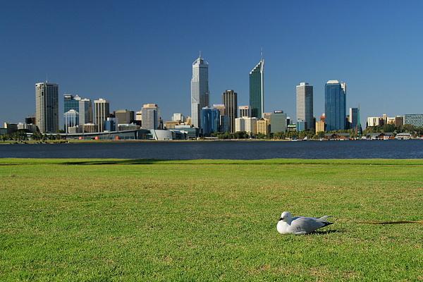 032_IMG_3164_Perth從南伯斯隔天鵝河看市區美景.JPG