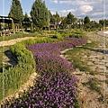 073_MG_8184_C2_棉堡的花園種著紫色的花,色彩很美.JPG