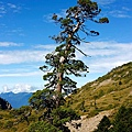 063_MG_1684_C_造型特殊的樹.JPG