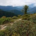 011_MG_1199_C_走出森林景觀大不同,多了矮小的灌木.JPG