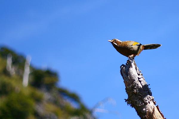 007_IMG_6471_C_忘了名字的鳥兒.JPG