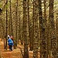 007_MG_1120_C_很美的森林.JPG
