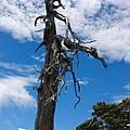 073_MG_1713_C_路邊的枯木.JPG