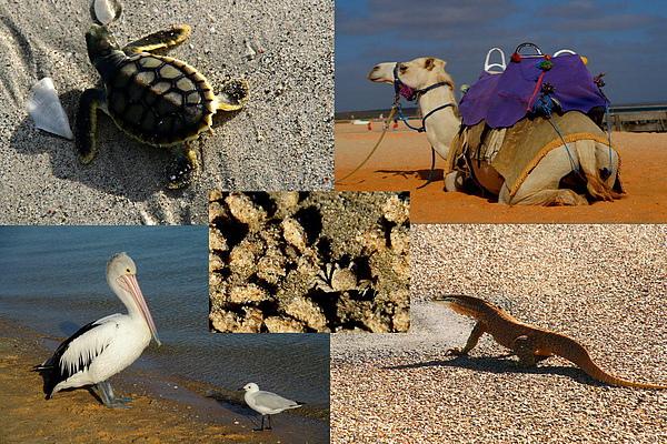 017_animals 西澳動物.JPG