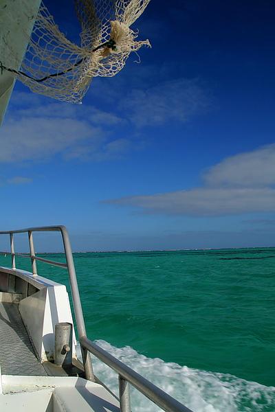 033_IMG_3612_Ningaloo_Reef東澳有個大堡礁, 西澳則有寧格魯礁,搭船尋訪美麗珊瑚礁.JPG