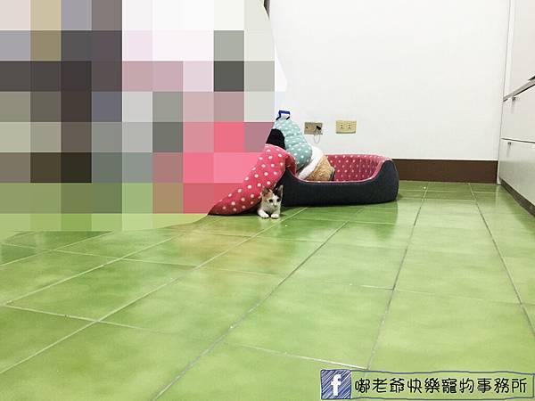 小花花_8823.jpg