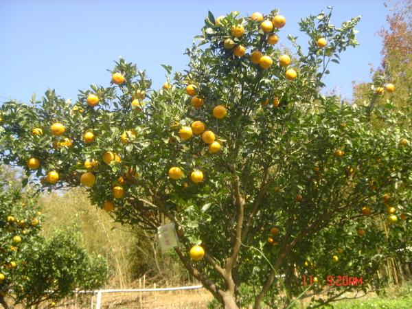別懷疑!都是橘子喔