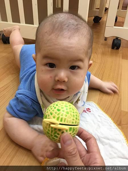 0726 夏日水果-哈密瓜_1.jpg