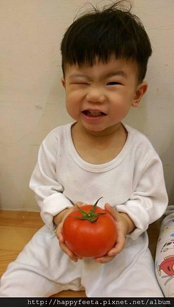 寶寶班~好吃的蕃茄_42.jpg