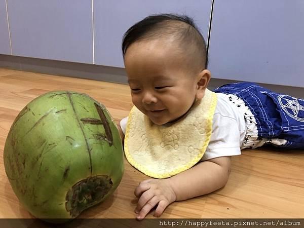 河馬。大大的椰子_21.jpg