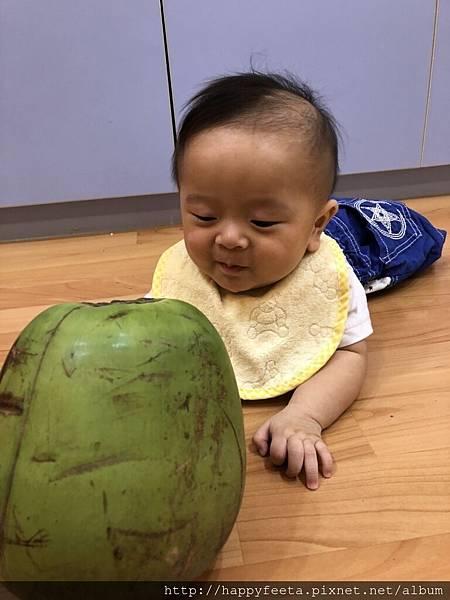 河馬。大大的椰子_25.jpg