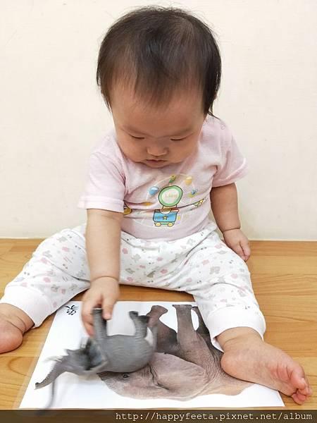 乳牛-認識大象_180809_0001.jpg