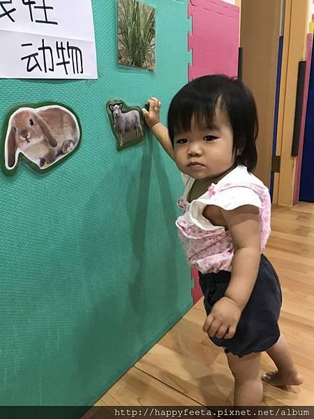 大🐘班-動物吃什麼_180810_0007.jpg