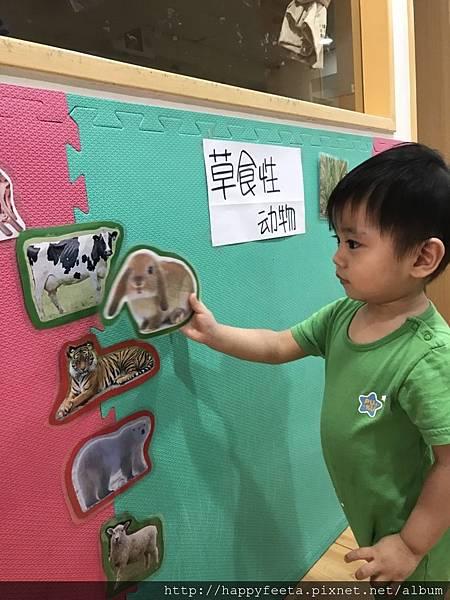 大🐘班-動物吃什麼_180810_0020.jpg