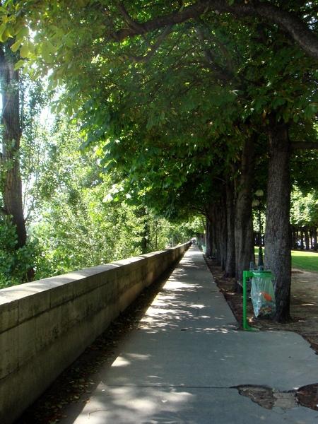 在塞納河畔的公園,好靜,好涼我喜愛