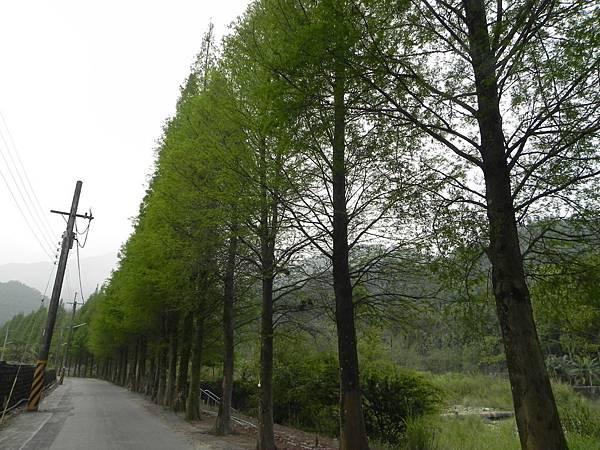 桂林村 (5).jpg