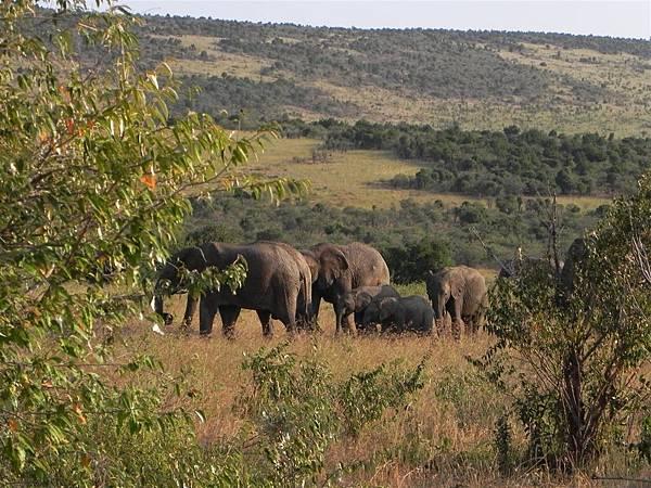 Elephant (2).JPG