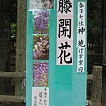 奈良春日大社 (9).JPG