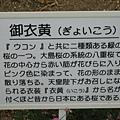 奈良春日大社 (33).JPG