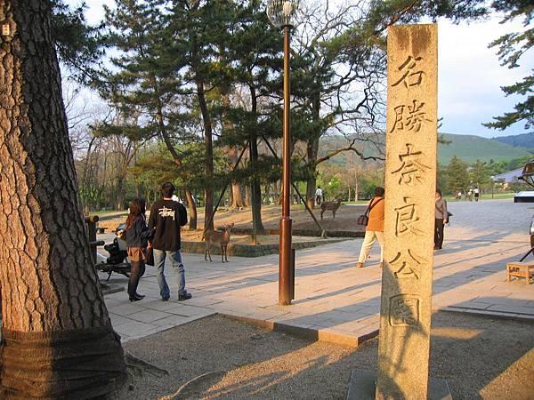 奈良公園 (1).JPG