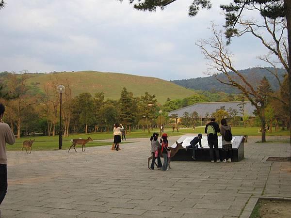 奈良公園 (2).JPG