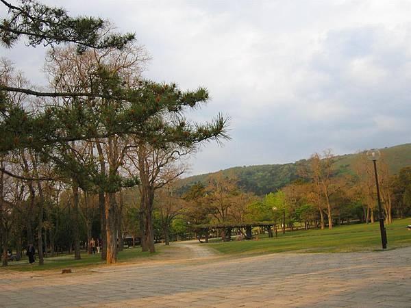 奈良公園 (4).JPG