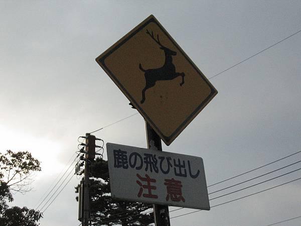 奈良公園 (7).JPG