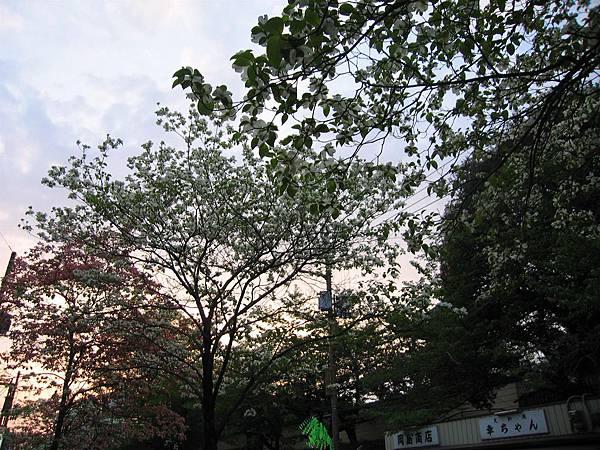 奈良三条通 (2).JPG