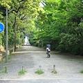 京都御苑 (1).JPG