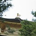 京都金閣寺 (8).JPG