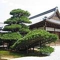 京都金閣寺 (10).JPG