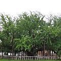 京都西本願寺 (8).JPG