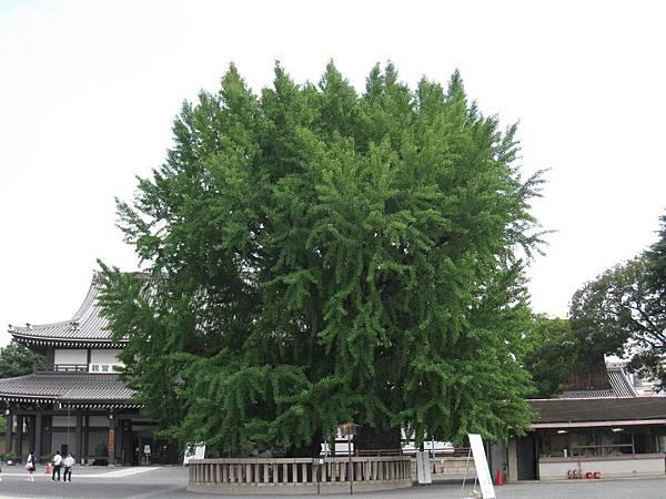 京都西本願寺 (14).JPG