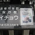 京都西本願寺 (15).JPG