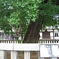 京都西本願寺 (16).JPG