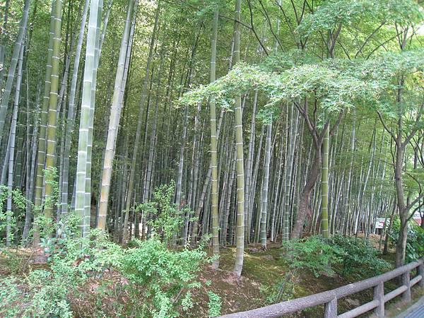 京都嵐山 天龍寺 (62).JPG