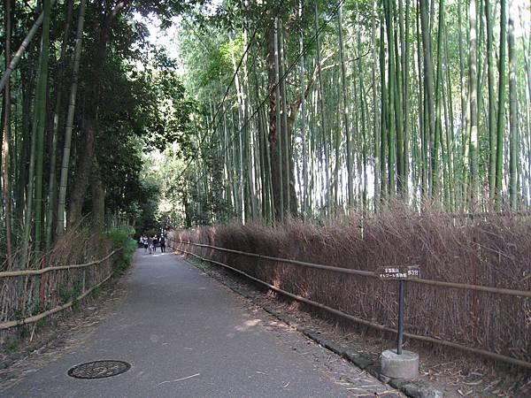 京都嵐山 竹林小徑.JPG