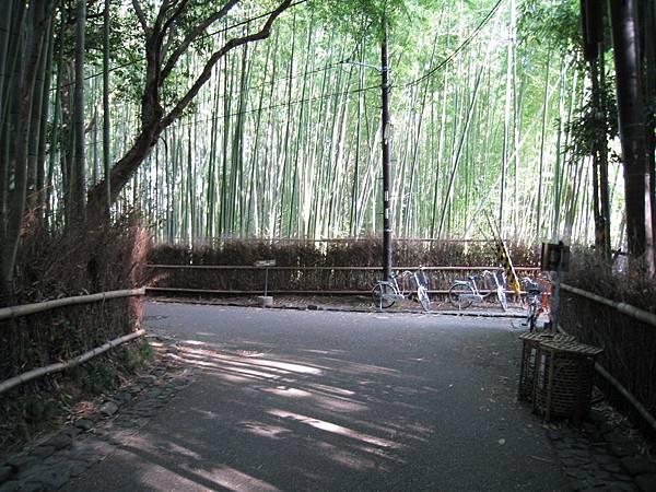 京都嵐山 竹林小徑 (2).JPG