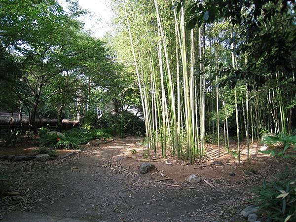 京都嵐山 竹林小徑 (6).JPG